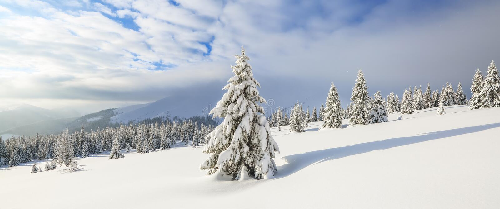 Winter landscape. Spectacular panorama is opened on mountains, trees covered with white snow, lawn and blue sky with clouds.  royalty free stock image