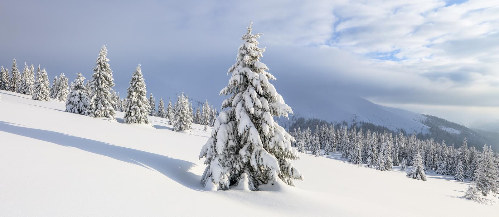 Winter landscape. Spectacular panorama is opened on mountains, trees covered with white snow, lawn and blue sky with clouds.  royalty free stock photography