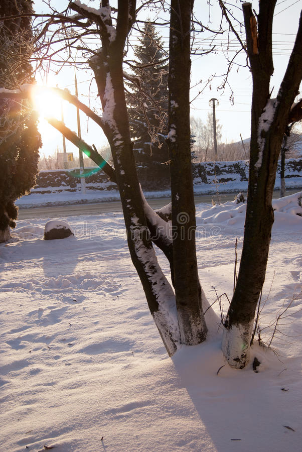Winter landscape - spreading forest tree in sunset light. scene - wonderland in cold weather in snowy . in the . stock photography