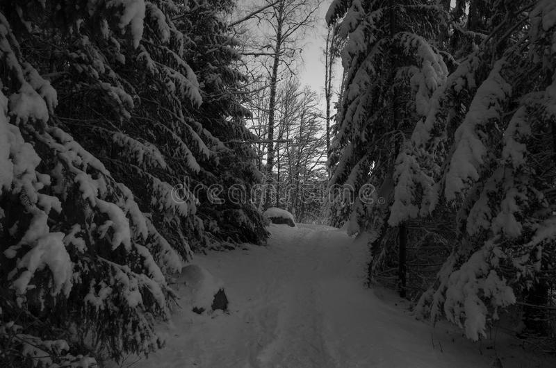 Winter landscape Sweden. Black and white winter landscape with snow in Swedish forest royalty free stock photos