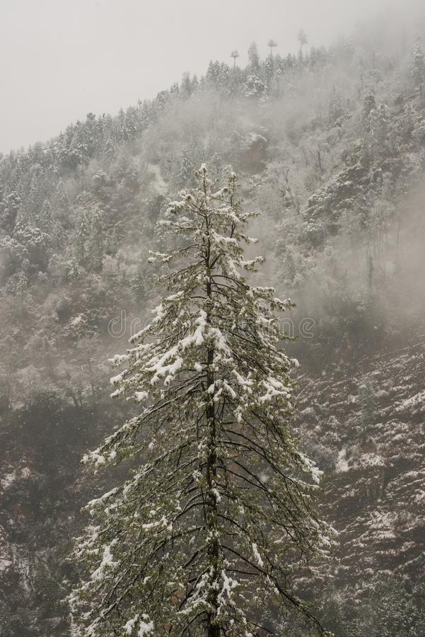 Winter landscape. Tree and dry grass plants in the snow. Snow caped mountain range in blurred background stock photos