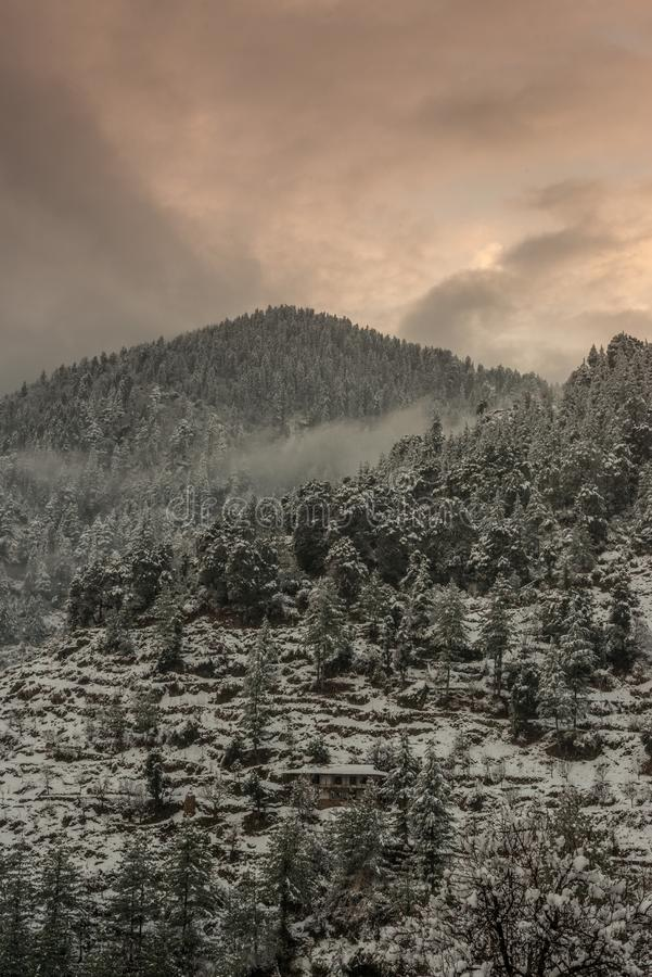 Winter landscape. Tree and dry grass plants in the snow. Snow caped mountain range in blurred background stock image