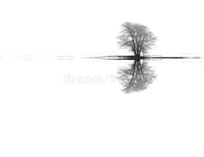 Winter landscape tree reflections royalty free stock photo