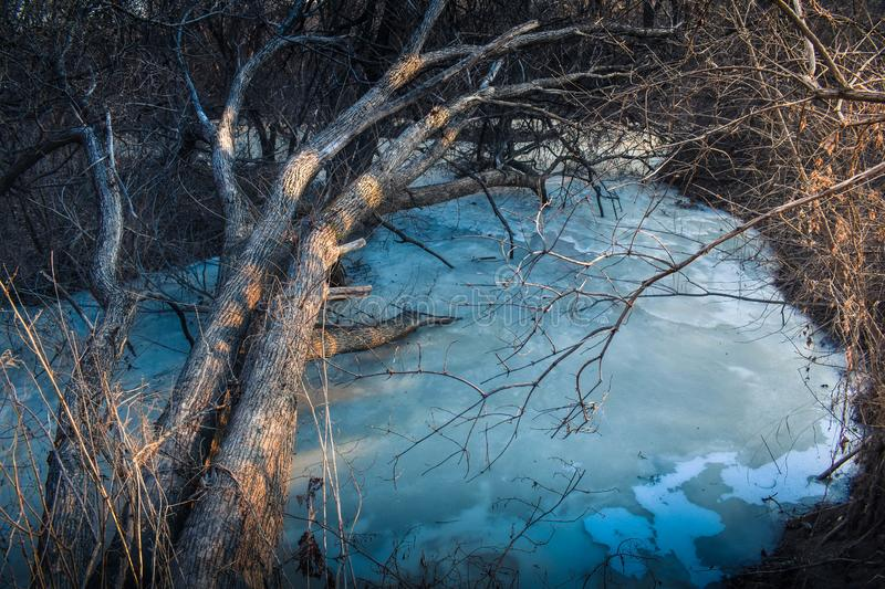 A tree lit by the rays of a sunset leans over a frozen stream of the river. stock photo