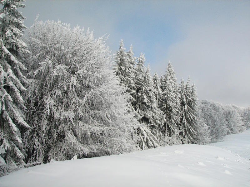 Winter landscape - trees royalty free stock photography