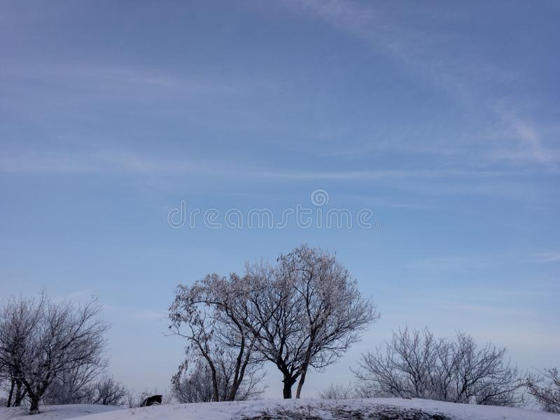 Winter landscape with trees and blue sky. Cold day, cloudy weather. stock photography
