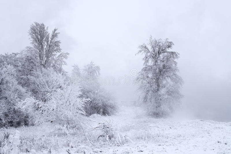 Download Winter Landscape - Trees Covered With Snow Stock Image - Image: 12245673