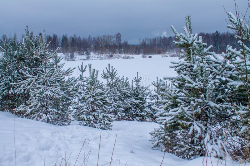 Winter landscape trees covered with snow in the meadow royalty free stock photos