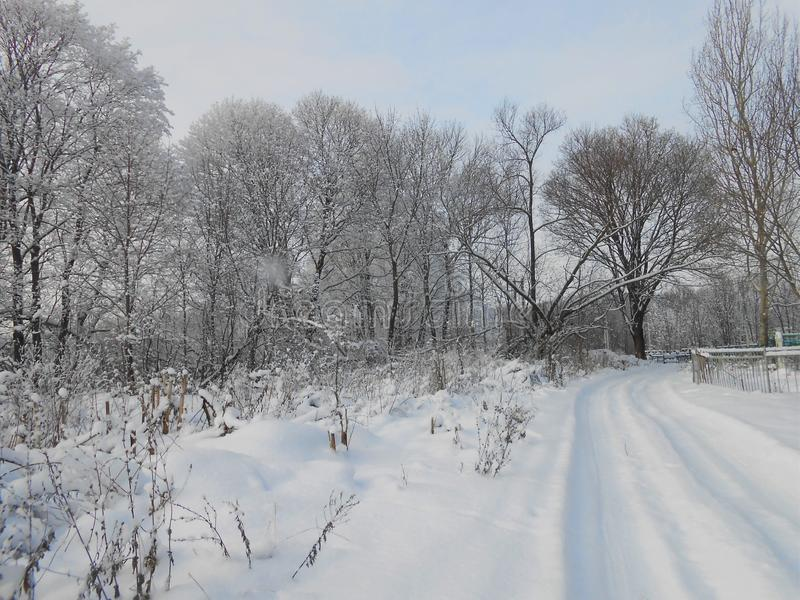 Winter landscape with trees and fresh snowdrifts. stock image