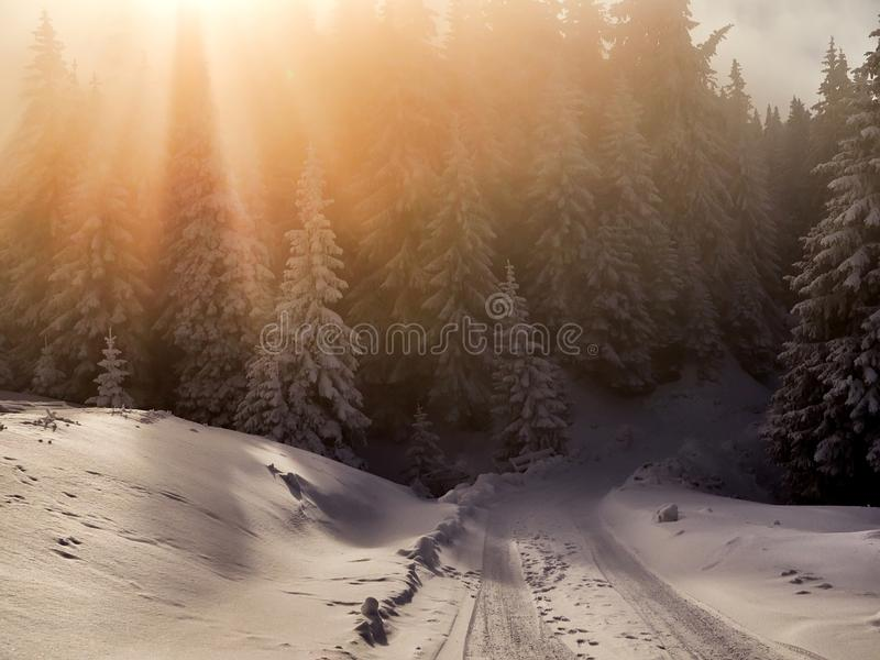 Winter landscape with trees and mountains covered with snow royalty free stock photo