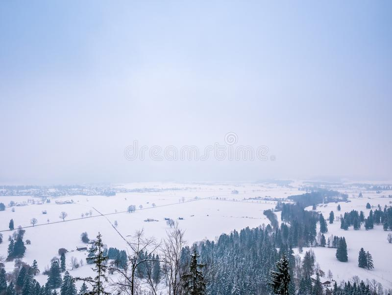 Winter landscape trees pine with empty space for text. royalty free stock image