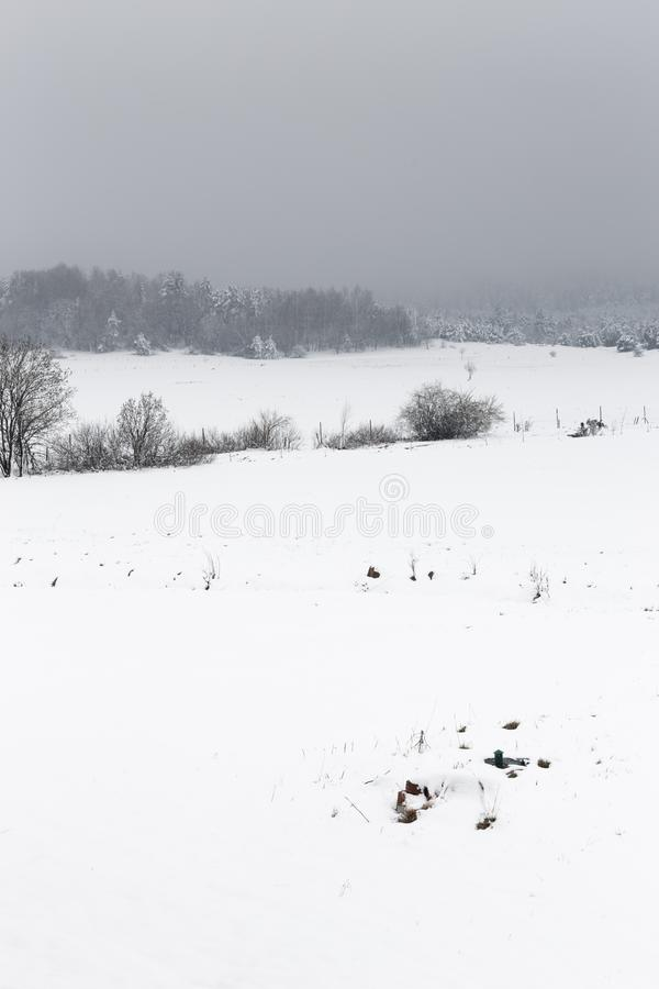 Winter landscape with trees stock illustration