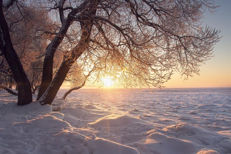 Winter landscape. Warm sunlight at winter at sunset. Frost and fog. Tree on textured snow in sun royalty free stock photography