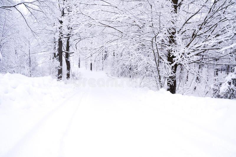 Download Winter landscape stock image. Image of overcast, monochrome - 34613709