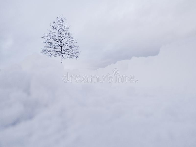Winter landscape. White snow above tree. Winter panorama landscape with forest trees. Winter landscape. White snow above tree. Winter panorama landscape with royalty free stock photography