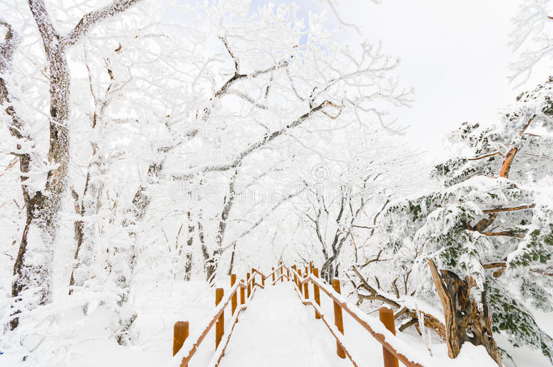 Winter landscape white snow of Mountain in Korea. Winter landscape white snow of Mountain in Korea stock images
