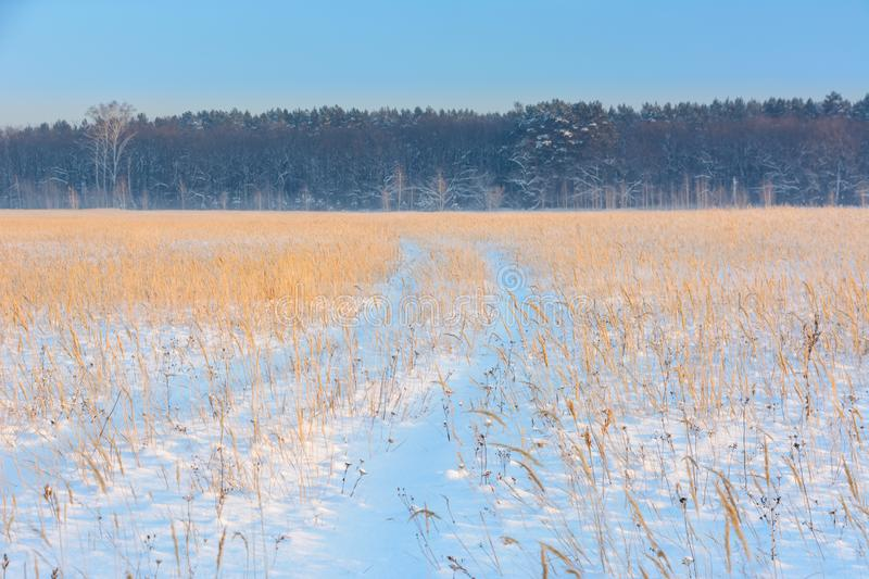 Winter landscape. Winter country road in the background of the forest and blu sky. Traces of cars. In the snow royalty free stock images