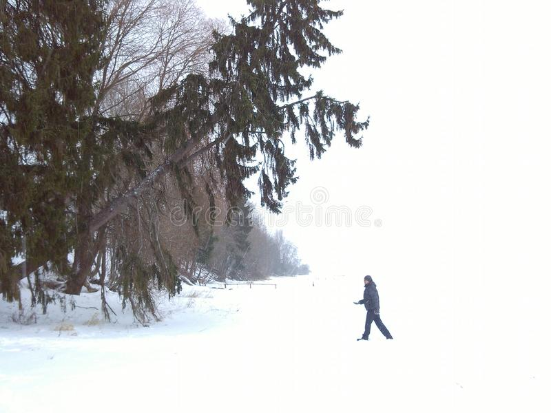 Winter 1 royalty free stock photography