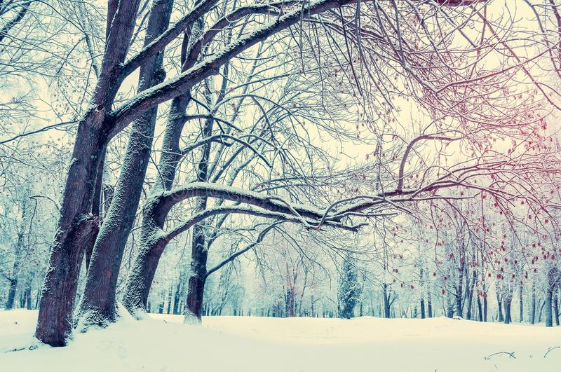 Winter landscape. Wonderland forest with winter forest trees covering with frosy and snow. Snowy winter scene. Winter forest landscape stock photos