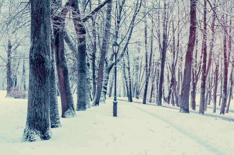 Winter landscape. Wonderland winter forest with winter forest trees covering with frosy and snow. Winter landscape. Wonderland winter forest with winter forest royalty free stock photography