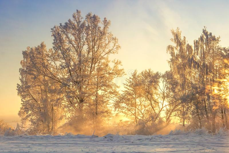 Winter landscape in yellow sunlight. Scenery frosty nature. Christmas background. Hoarfrost on trees and plants royalty free stock images