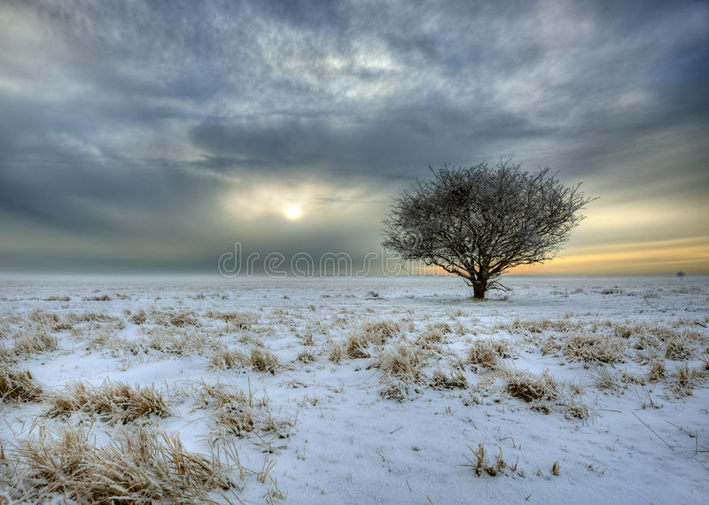 Download Winter landscapes stock photo. Image of misty, quiet - 17510296