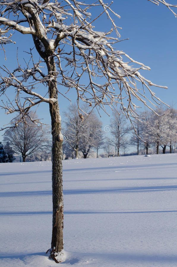 Winter-Landschaft stockfotografie