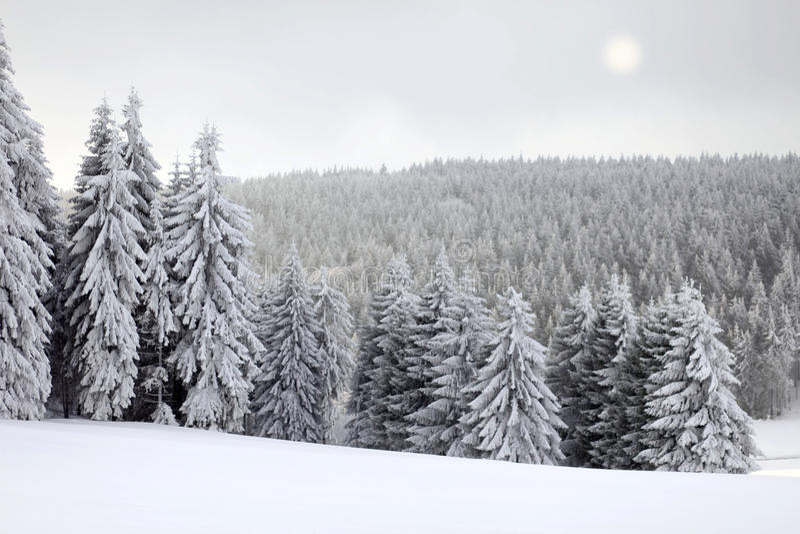 Winter-Landschaft mit Sun lizenzfreies stockfoto