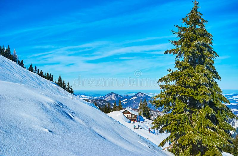 Winter landscpae with spruce tree, Zwolferhorn, St Gilden, Salzkammergut, Austria. Watch the scenic Alpine landscapes from the steep slopes of Zwolferhorn royalty free stock photography
