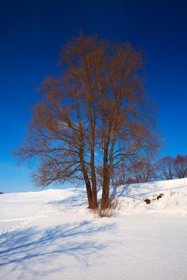 Winter lanscape with trees