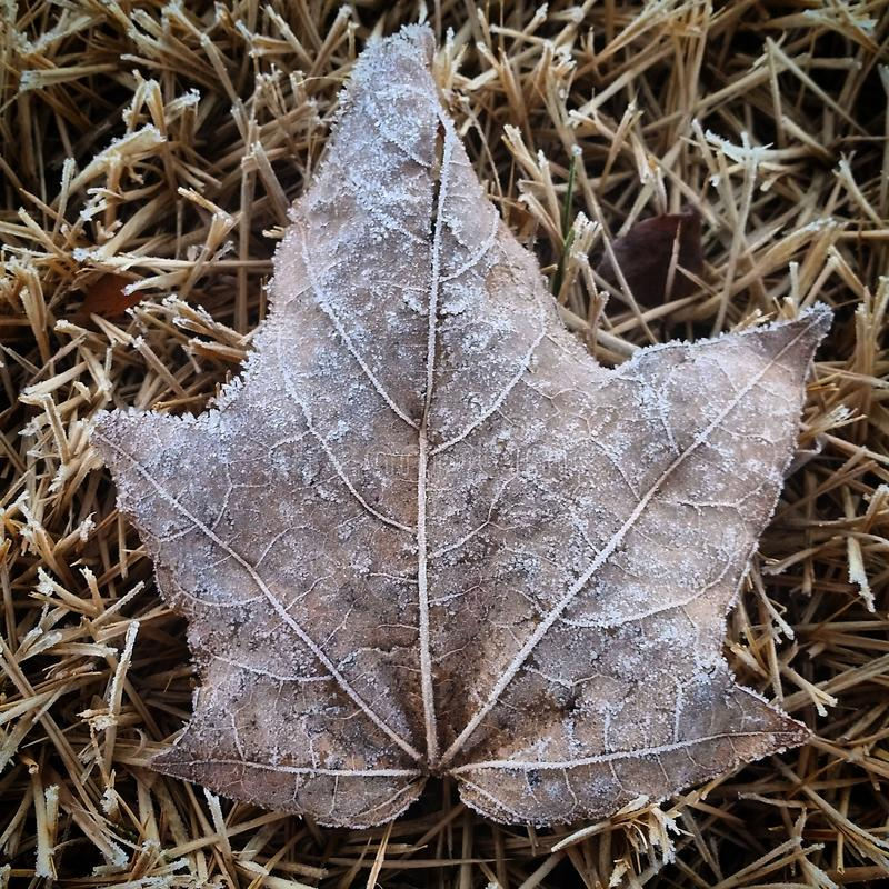 Winter Leaf. Leaf with Winter frost royalty free stock photos