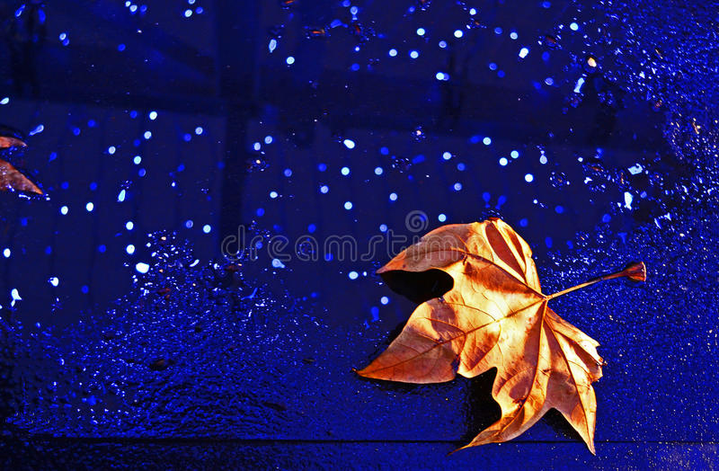 Winter leafs royalty free stock images