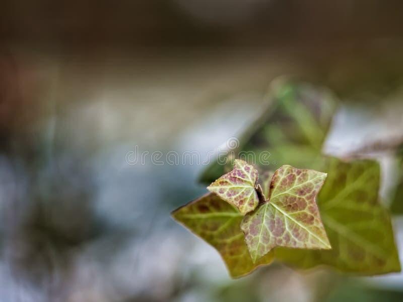 Winter Leaves Free Public Domain Cc0 Image