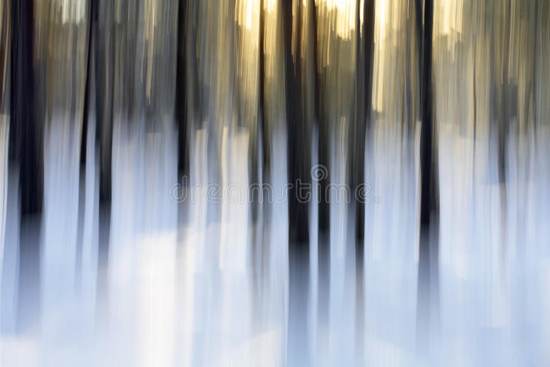 Winter Light. Abstract winter forest scene, intentional vertical blur done in-camera