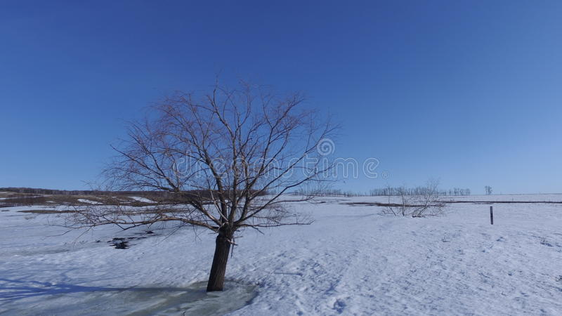 Winter. Lonely tree on an empty field stock photos