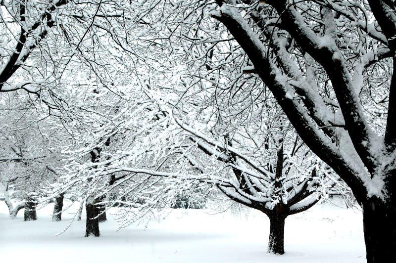 Winter-Märchenland IV stockfoto