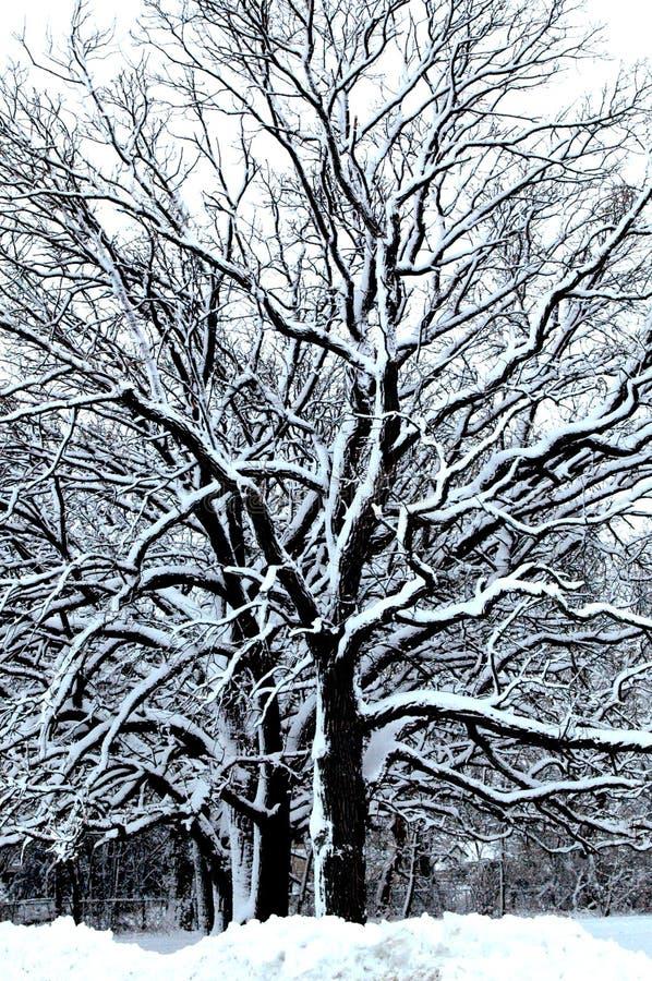 Winter-Märchenland VI stockbild