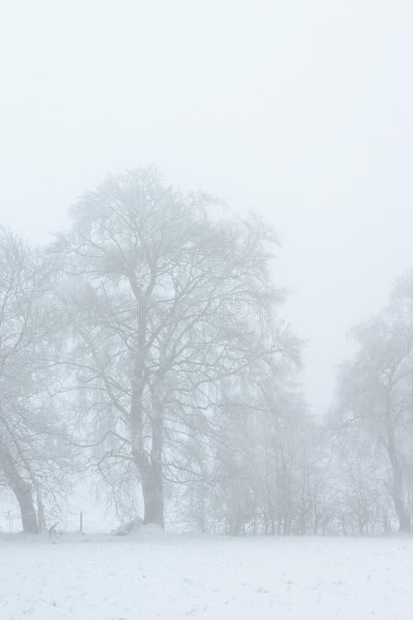 Free Winter Magic2 Stock Images - 8565924