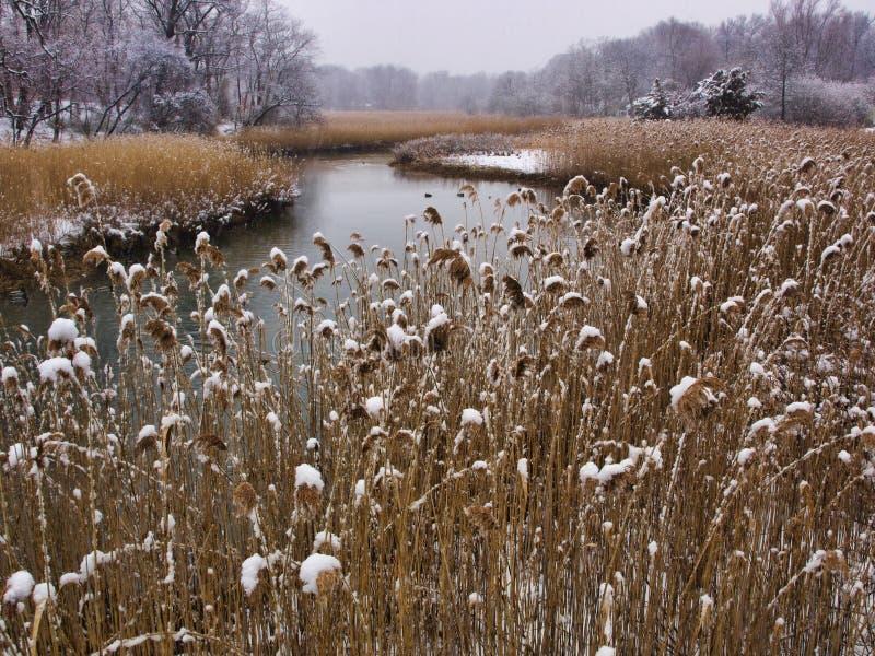 Winter Marsh Royalty Free Stock Photos