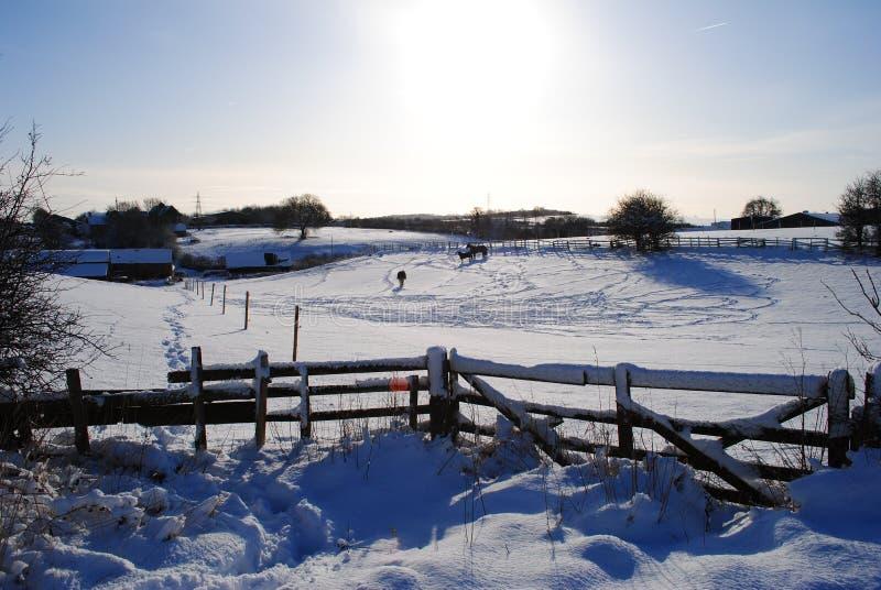 Winter meadow stock image