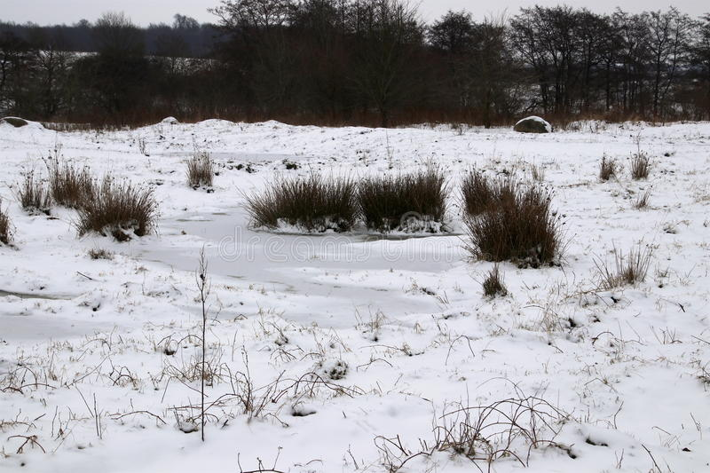 Winter in the meadow and fresh snow. So lovely royalty free stock image