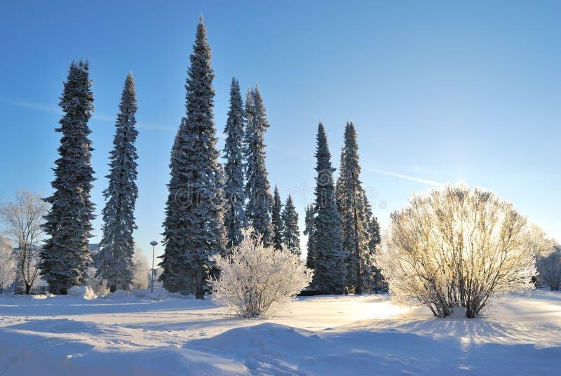 Winter in Mikkeli Park, Finland stock foto