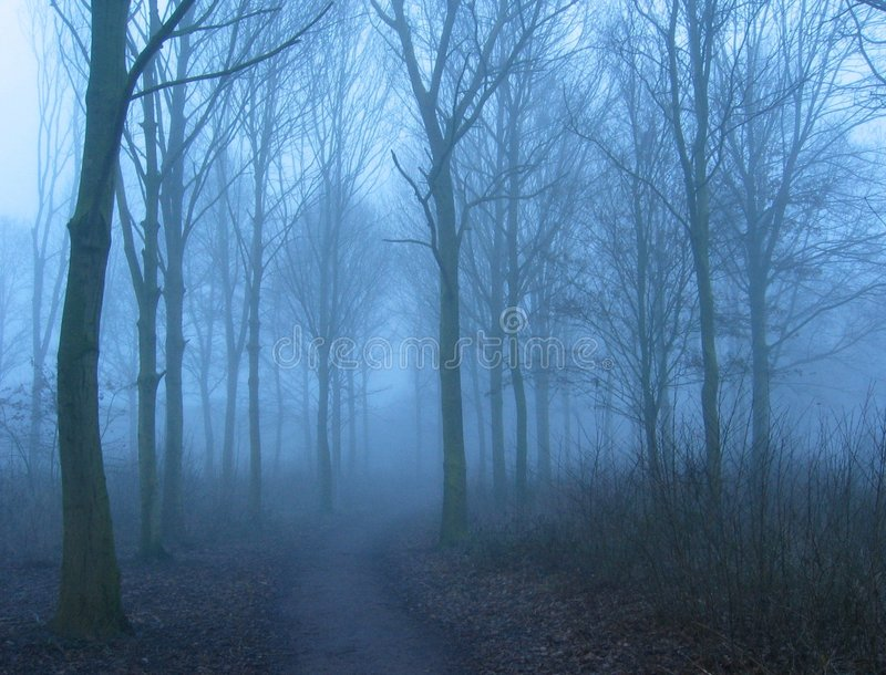 Winter mist royalty free stock photography