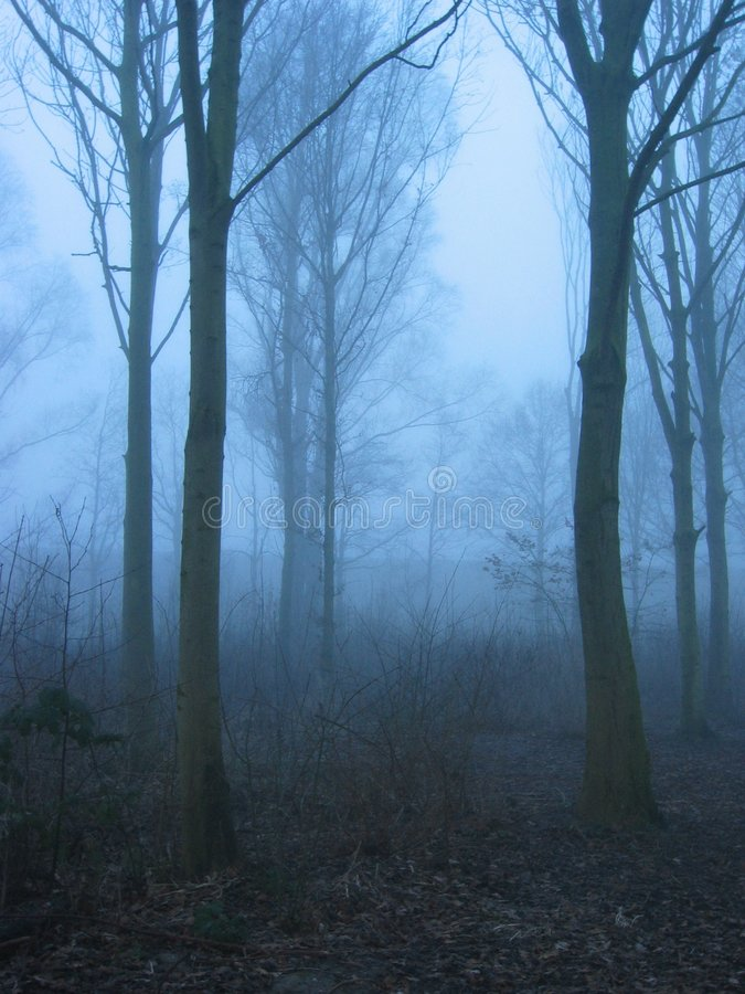 Download Winter mist stock photo. Image of trees, blue, winter, misty - 55588