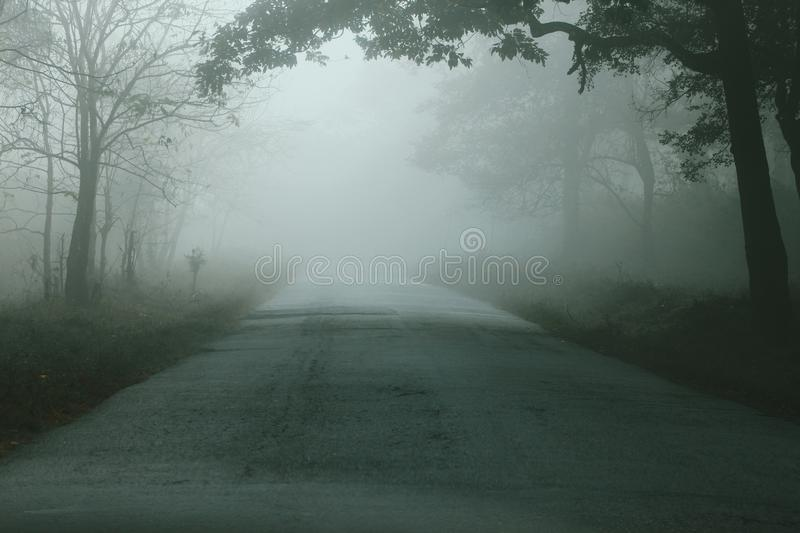 Winter Misty way royalty free stock images