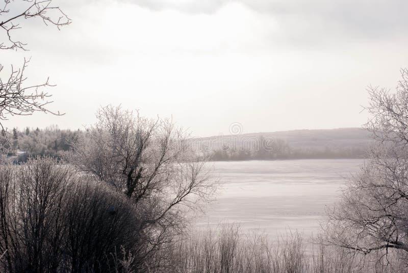 Winter mit Büschen stockfoto