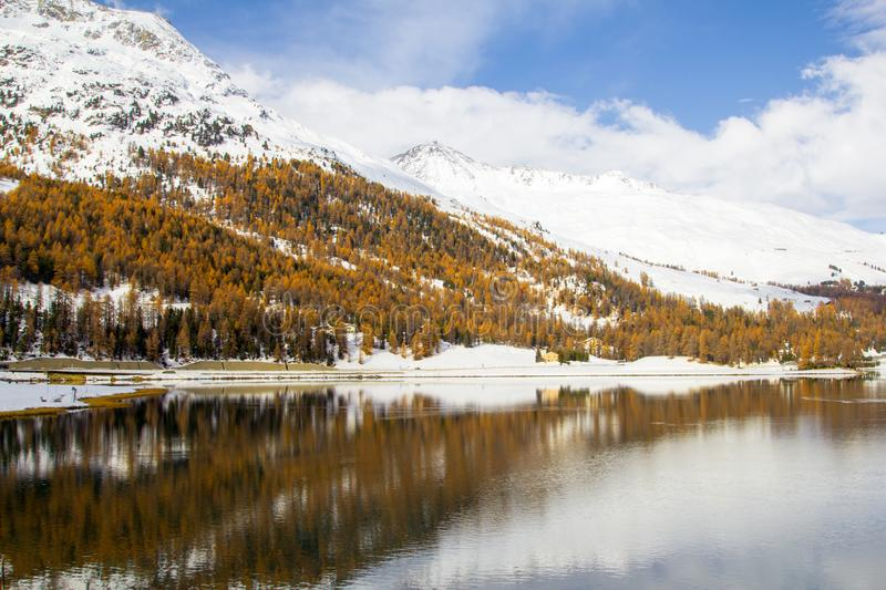Winter mit Lärchenbäumen, St Moritz, die Schweiz stockfoto