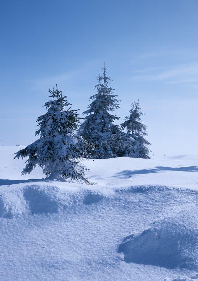 Download Winter Mood stock photo. Image of theme, tree, welfare - 18080096
