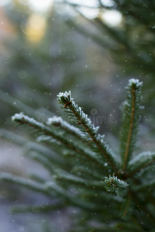 Winter mood. stock image