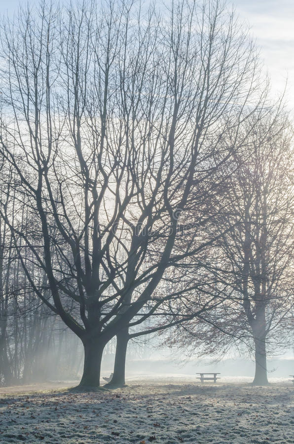 Download Winter morning stock photo. Image of park, resting, branch - 36726194